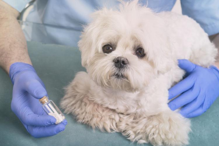 犬の埋伏歯【治療】