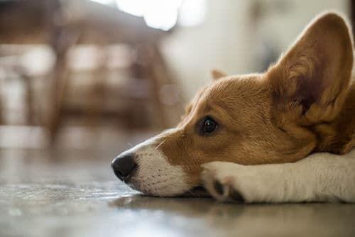 犬が便秘になった【考えられる原因・病気は?】