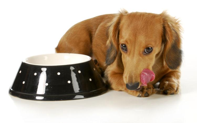 【獣医師監修】犬は納豆を食べても大丈夫!上手に栄養を摂る秘訣とは?