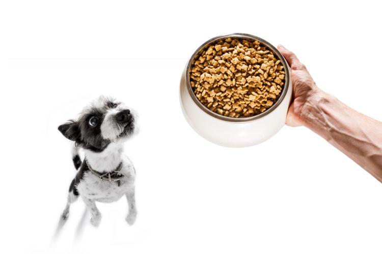 水をあまり飲まなくなっている老犬や、腎臓が悪くなっている老犬