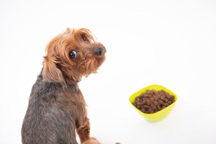 犬が「にがり」だけを飲むと、下痢や高マグネシウムなどの影響が出ます