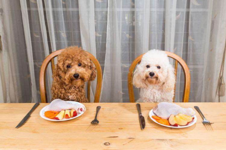 じゃがいもは、犬も好む食材の一つ。