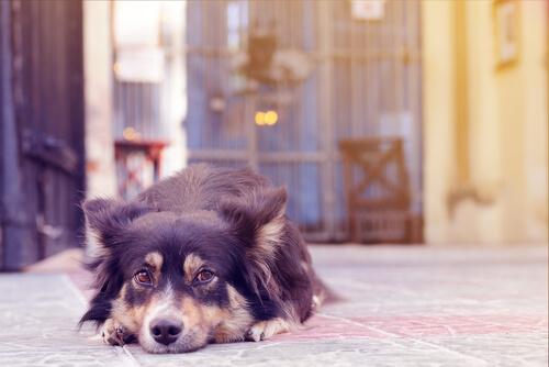 【獣医師監修】犬も嫉妬でやきもちを焼く!?飼い主が気付いてあげたい愛犬の気持ちと対処法!
