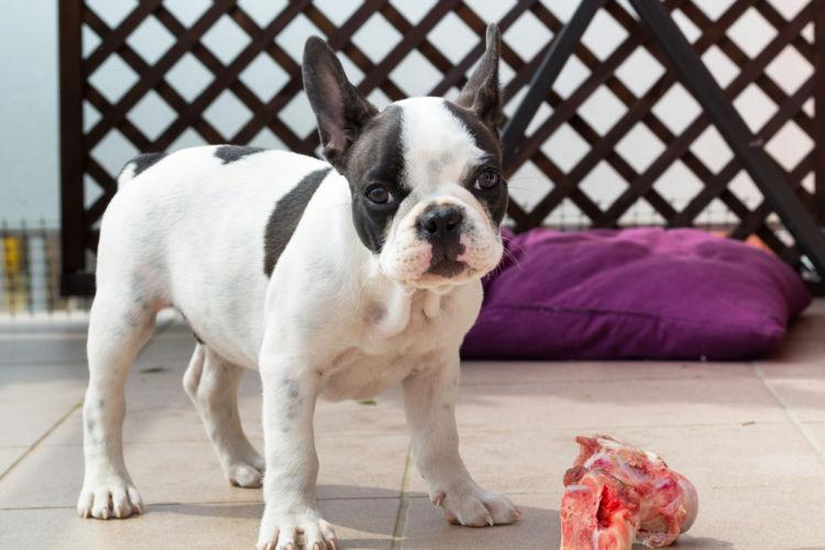 【獣医師監修】犬に豚肉をあげてもいい?あげるときの注意点は?