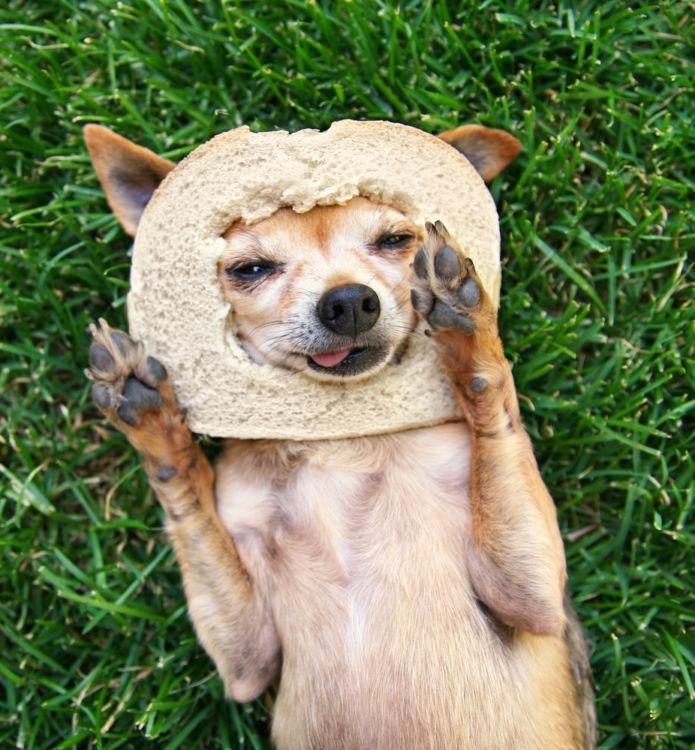 犬にパンを与えても大丈夫!
