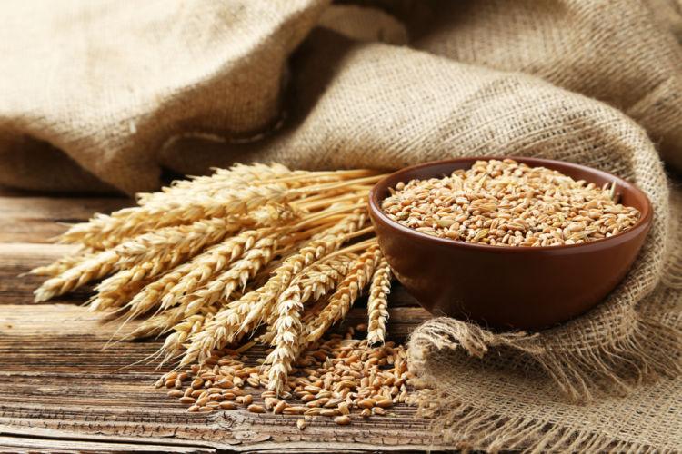 愛犬に与えるパンの「小麦アレルギー」に注意!