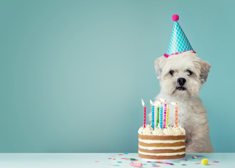 【獣医師監修】愛犬の誕生日に!犬用ケーキを手作りする際に注意したいこと
