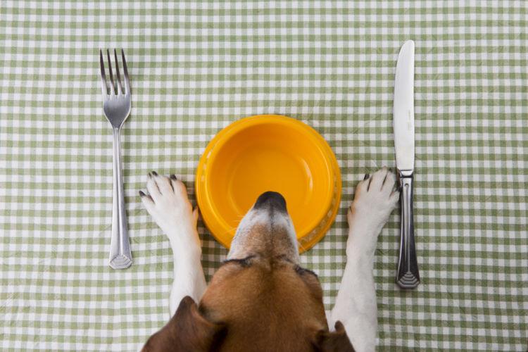 【獣医師監修】愛犬のための手作りご飯。メリットやデメリット、おすすめ簡単レシピ!