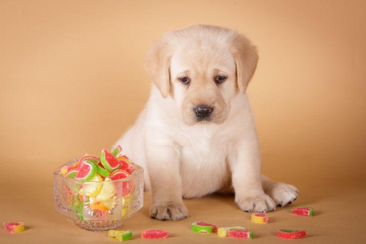 【獣医師監修】人間用のお菓子は犬に与えてはダメ!肥満と病気のリスクも対処法は!?