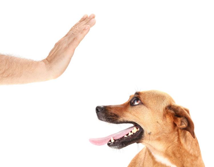 愛犬にはニラを食べさせない