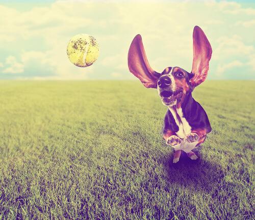 「ガルル……」楽しく遊んでいたはずなのに、愛犬が急にうなる理由