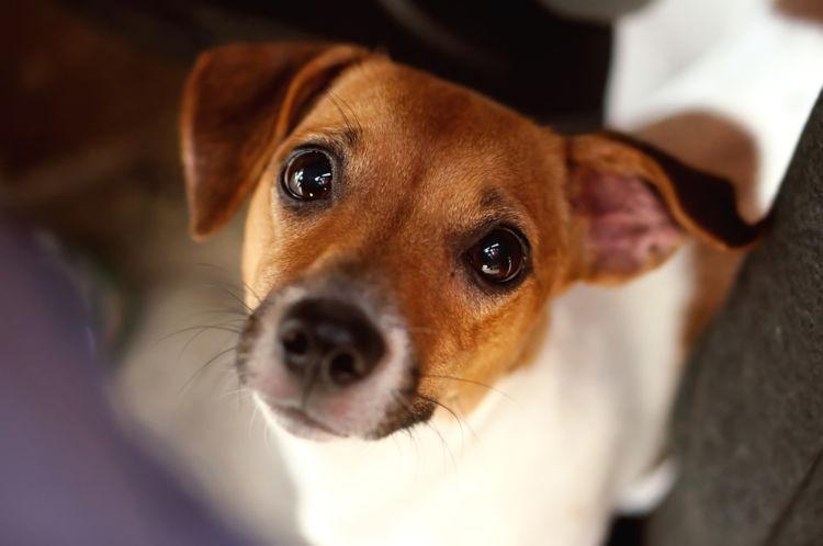 愛犬への栗の与え方は?鬼皮や渋皮には注意!