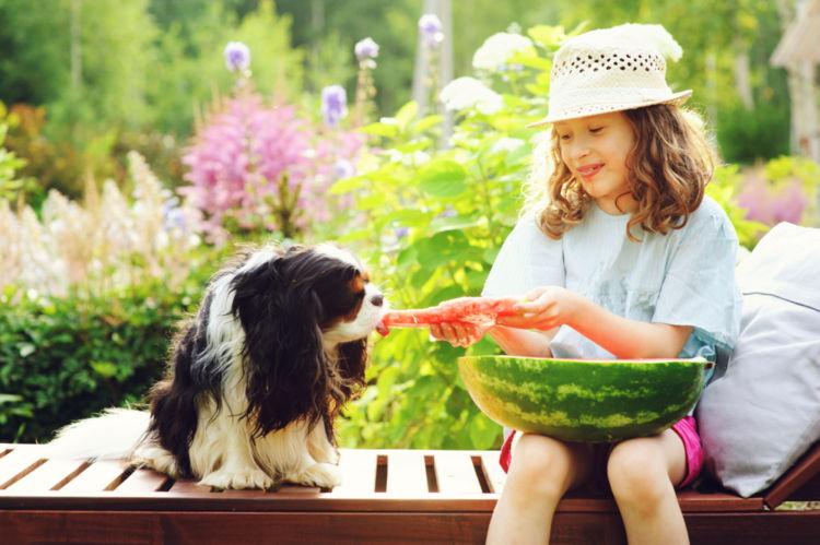 【獣医師監修】犬がスイカを食べても大丈夫!?食べ過ぎやスイカの「皮」「種」に注意!