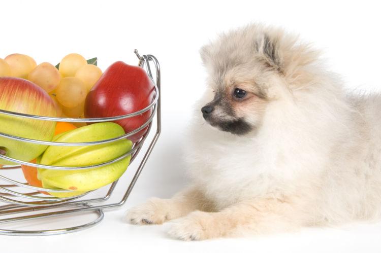 犬が中毒やアレルギーを起こさない果物なら食べても大丈夫!