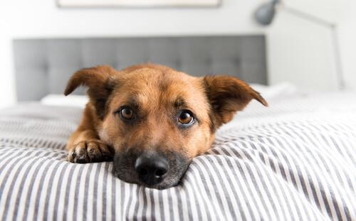 見逃さないで!愛犬が飼い主に甘えたいときにする、3つのしぐさ