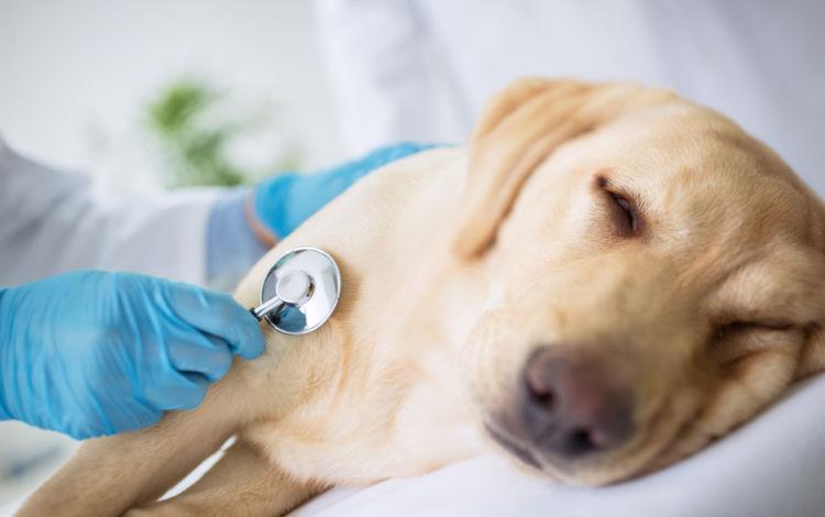 愛犬が「ぶどう中毒」や「腎不全」を発症した時に考えられる症状とは?