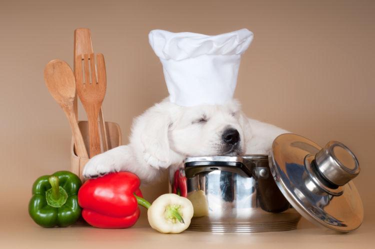 【獣医師監修】犬がピーマン(生)を食べても大丈夫?メリットや適量、臭いは大丈夫?
