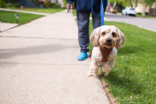 散歩を嫌がる犬の飼い主が今すぐ解決すべき、愛犬が抱いている3つの理由