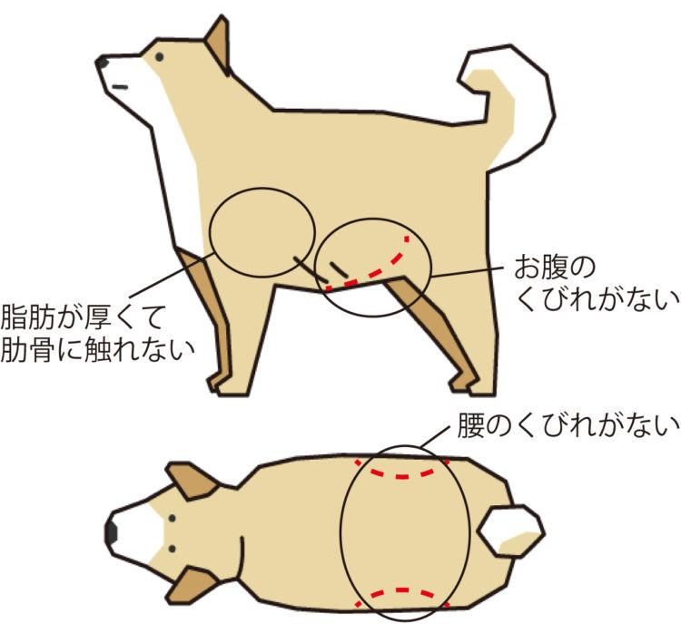 犬の肥満と適正体重とは?