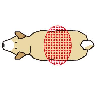 犬の腰のくびれをチェック(ボディコンディションスコア(BCS)4つのチェックポイント)