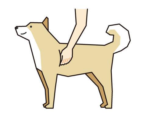 犬の肋骨をチェック(ボディコンディションスコア(BCS)4つのチェックポイント)