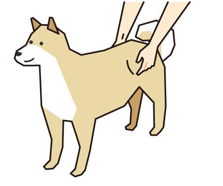 犬の腰骨をチェック(ボディコンディションスコア(BCS)4つのチェックポイント)