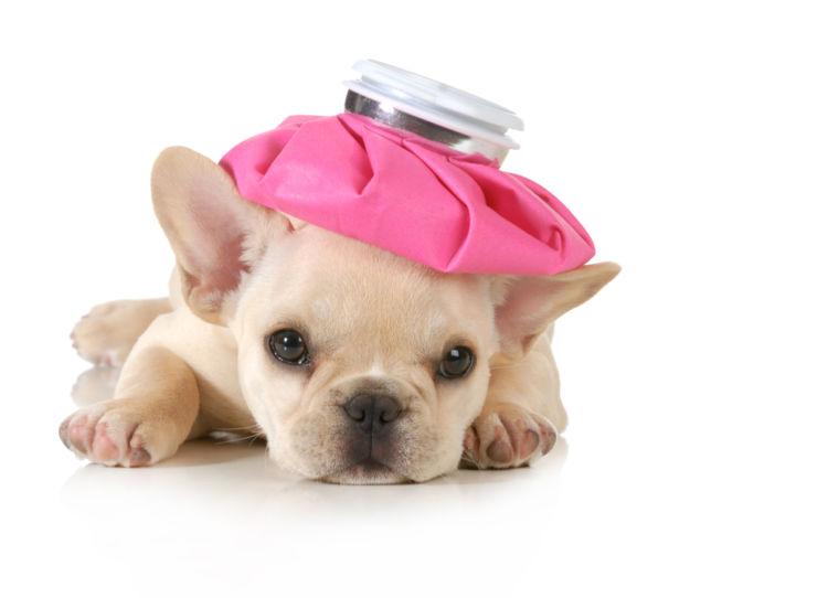 犬の肥満と熱中症の関係性