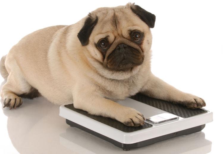 愛犬の定期的な体重測定が大切!