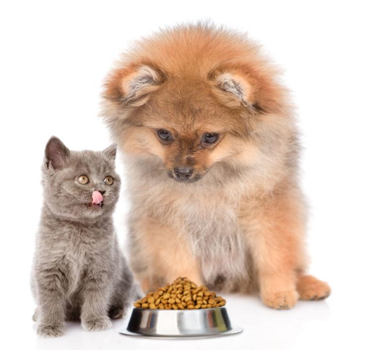 犬の食習慣