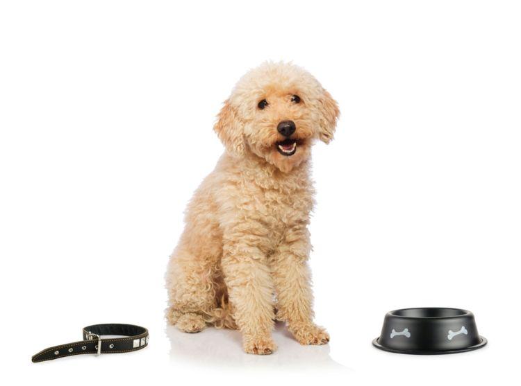 犬の食事と栄養