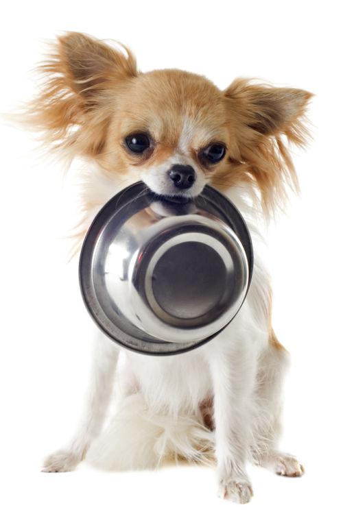犬の食事に必要な栄養素とその役割