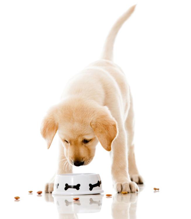 愛犬への適切な食事の与え方