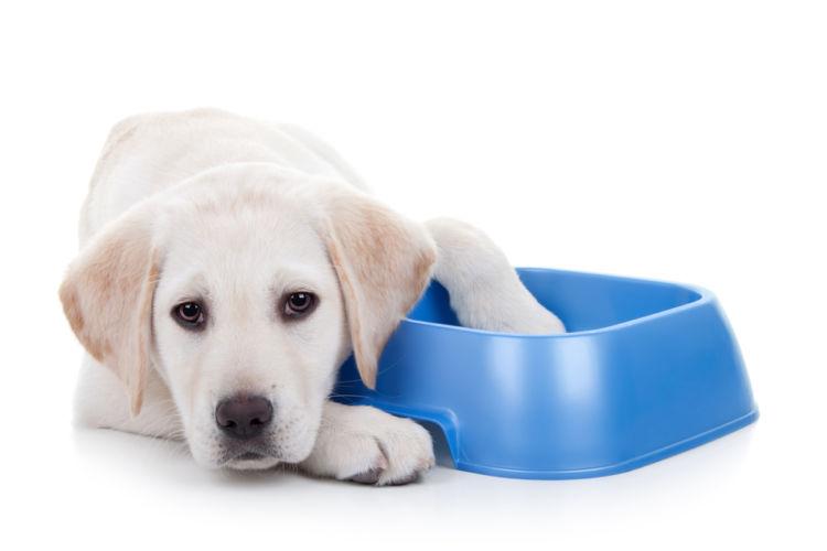 犬の減量用フードへの切り替え方、フードの与え方