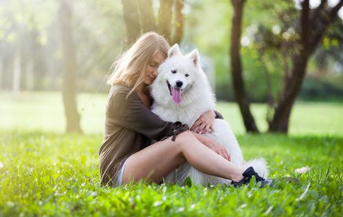 【獣医師監修】知っておきたいサモエドの特徴と飼い方「大きな体の白い甘えん坊!」
