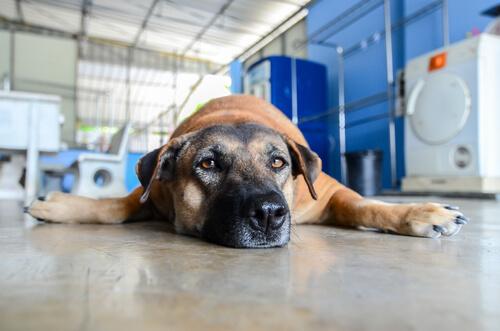 犬だってストレスを抱えている。犬がしんどいときに見せる4つの症状