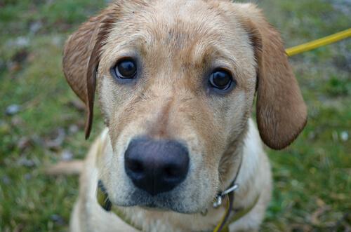 寒さ?それとも病気?犬がブルブル震える5つの理由とその対処法