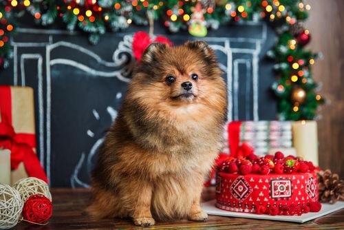 【獣医師監修】愛犬の「犬用誕生日ケーキ」を手作りする際の注意点!アレルギーは!?