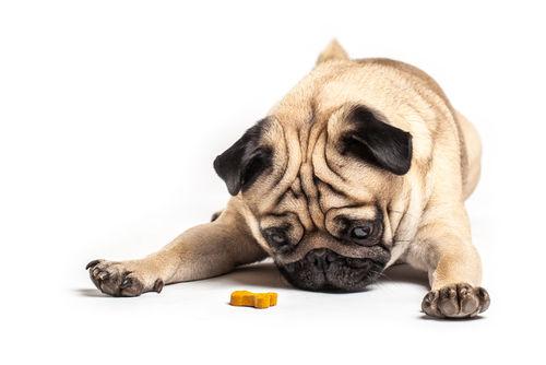 【獣医師監修】愛犬に犬用クッキーを手作りするメリット!アレルギーや丸飲み注意!