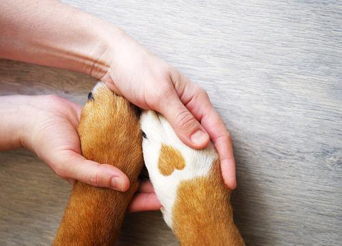 愛犬の健康のために肉球ケア(マッサージ)を忘れずに!