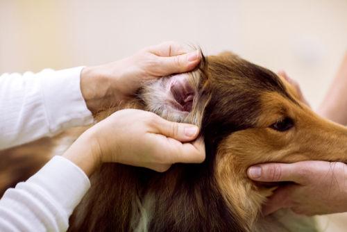 愛犬の肉球が臭すぎる場合は要注意!