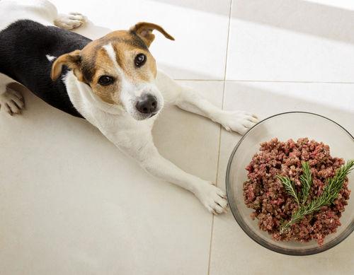 愛犬の手作りご飯を作る際のポイント!