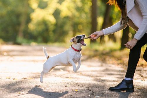 正しい知識を持って、愛犬に人間用のお菓子を与えましょう!