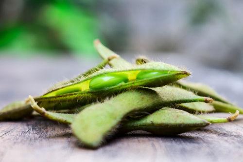 ●枝豆の注意点③ 枝豆の「皮」「さや」は避ける