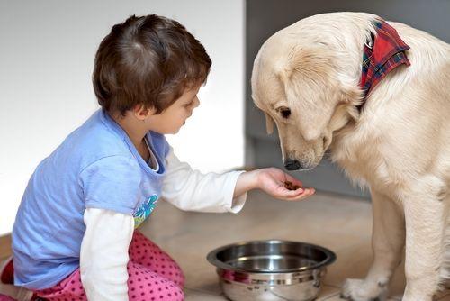 犬に枝豆を食べさせる時の注意点!