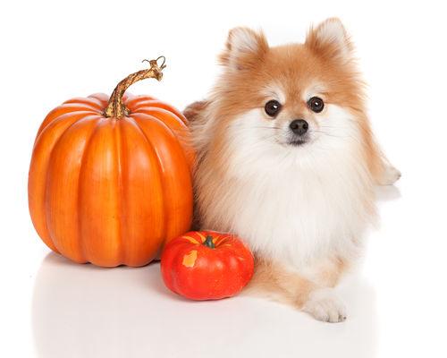かぼちゃのメリット①「ビタミンA」