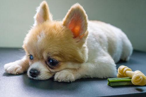 犬も熱中症になるの!?