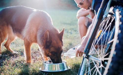 麦茶で愛犬の熱中症を防止しよう!