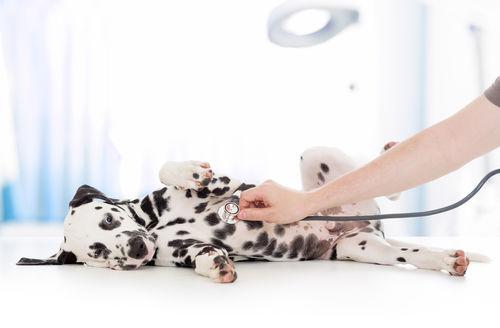 愛犬が「ぶどう中毒」になった場合、動物病院での処置とは?