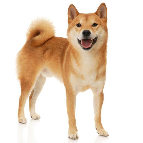 中型犬にバナナを与える際のおおよその量