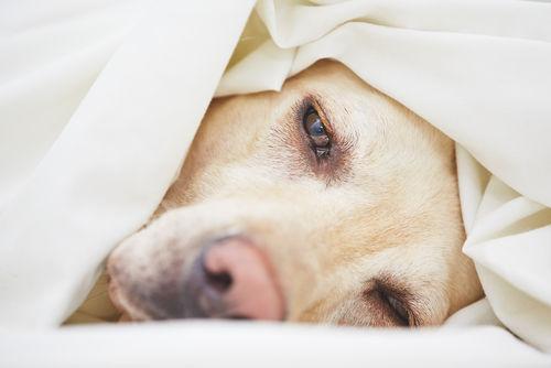 愛犬がスルメを大量に食べてしまった時の対処法!(生イカは大丈夫?)
